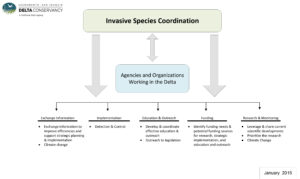 The figure is a flow chart that begins with Invasive Species Coordination with arrows that point forward to Agencies and Organizations Working in the Delta as well as back to Invasive Species Coordination. From Invasive Species Coordination, there are also arrows that point down to 5 different categories: Exchange Information, Implementation, Education and Outreach, Funding, and Research and Monitoring. Here these 5 categories and the specific tasks under each of the categories are described as a list. Category 1: Exchange Information. Tasks: exchange information to improve efficiencies and support strategic planning and implementation, and climate change. Category 2: Implementation. Task: detection and control. Category 3: Education and Outreach. Tasks: develop and coordinate effective education and outreach, and outreach to legislation. Category 4: Funding. Task: identify funding needs and potential funding sources for research, strategic implementation, and education and outreach. Category 5: Research and Monitoring. Tasks: leverage and share current scientific developments, prioritize the research, and climate change.
