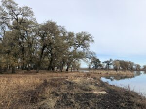Trees near the waterline at the Cosumnes River Preserve in the Sacramento-San Joaquin Delta.