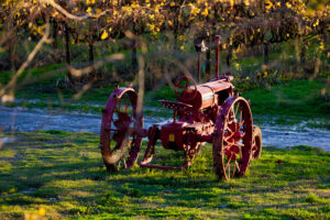 An old red tractor parked on green grass in front of a vineyard.