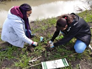 Two young women kneeling on the ground next to a creek, working together to place a small plant into the ground.