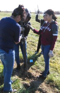 Four young adults working together to dig a hole and place a plan into the ground.